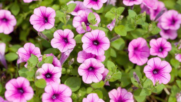 Spring Gardening Tips at Lealans Garden centre