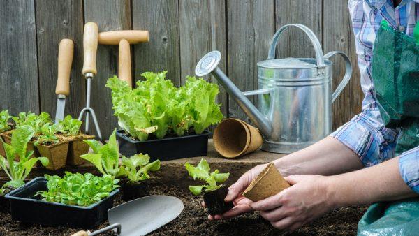 Lealans Garden Centre Gardening Advice 2