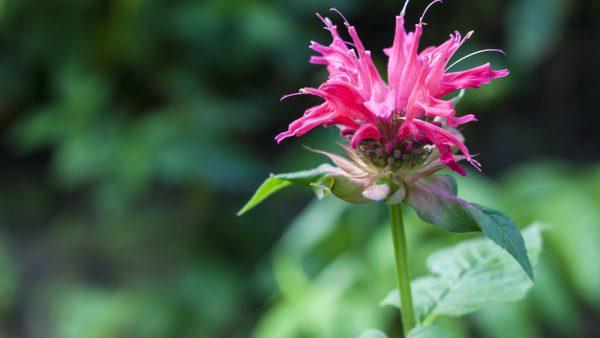 Gardening Advice September October 2017 2