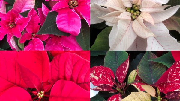 Gardening Advice November and December 2019 2