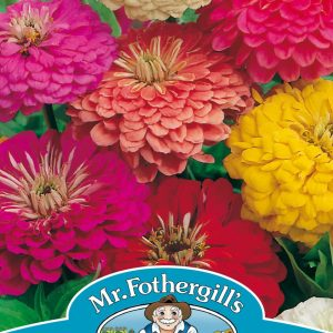 ZINNIA Early Wonder Mixed