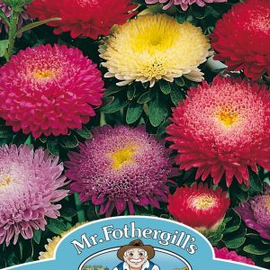 ASTER Pompon Mixed