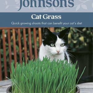 CAT GRASS - Avena sativa