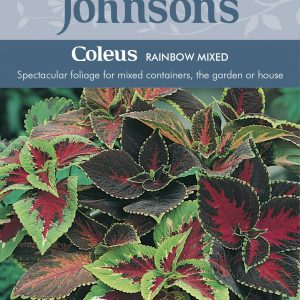 COLEUS Rainbow Mixed