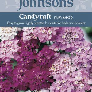 CANDYTUFT Fairy Mixed