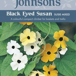 BLACK EYED SUSAN Susie Mixed