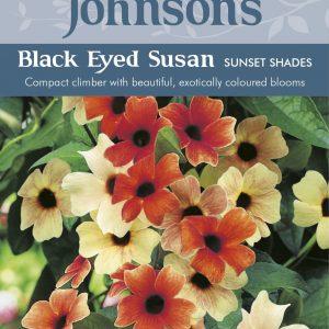 BLACK EYED SUSAN Sunset Shades