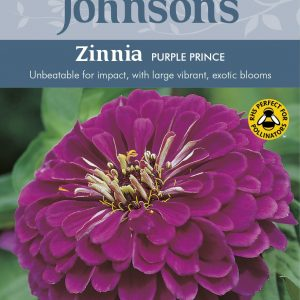 ZINNIA Purple Prince
