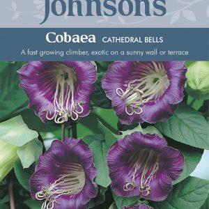 COBAEA Cathedral Bells