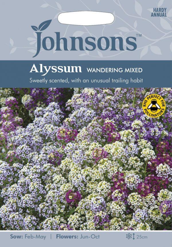 ALYSSUM Wandering Mixed