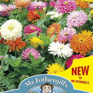 ZINNIA Choice Mixed