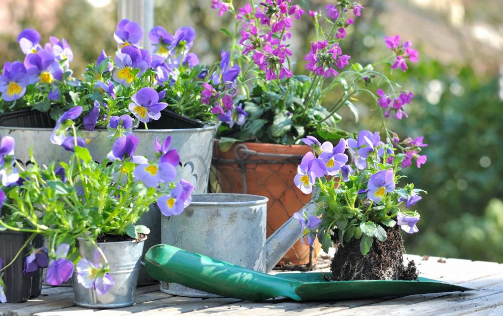 Time for the garden Lealans Garden Centre