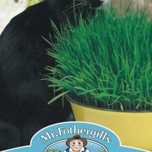 CAT GRASS Avena sativa
