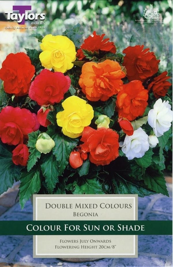 Double Begonia mixed colours