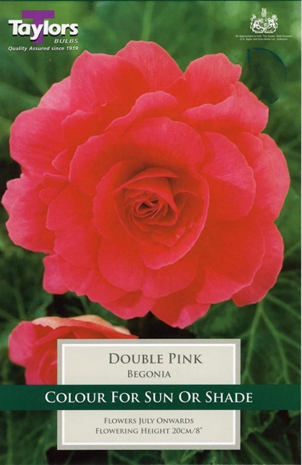Double Begonia Pink
