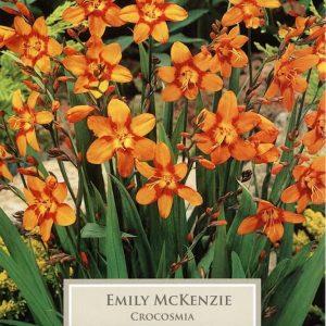 Crocosmia Emily McKenzie