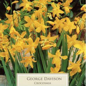 Crocosmia George Davison