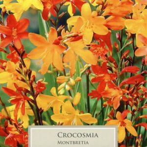 Crocosmia Mixed