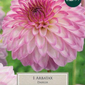 DAHLIA ARBATAX 1 PRE-PACK