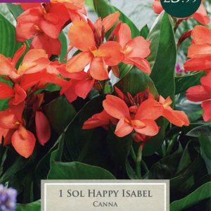CANNA SOL HAPPY ISABEL I P/P