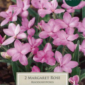 PRE PACKS RHODOHYPOXIS MARGARET ROSE I