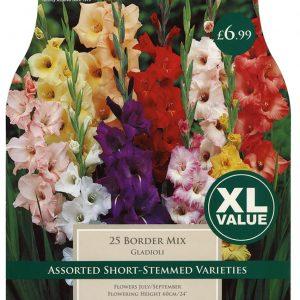 XL VALUE GLADIOLI BORDER MXD 10-12