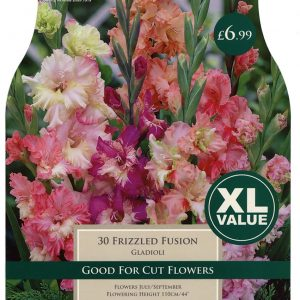 XL VALUE GLADIOLI FRIZZLED FUSION 10-12