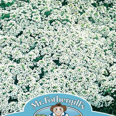ALYSSUM Snow Cloth