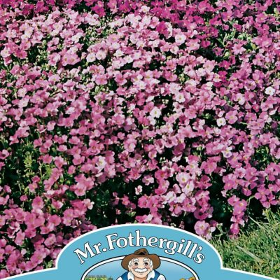 AUBRIETIA Large Flowered Mixed