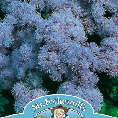 AGERATUM Blue Mink