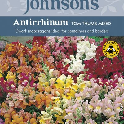 ANTIRRHINUM Tom Thumb Mixed