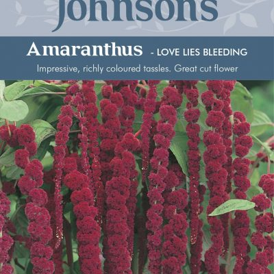 AMARANTHUS - Love Lies Bleeding